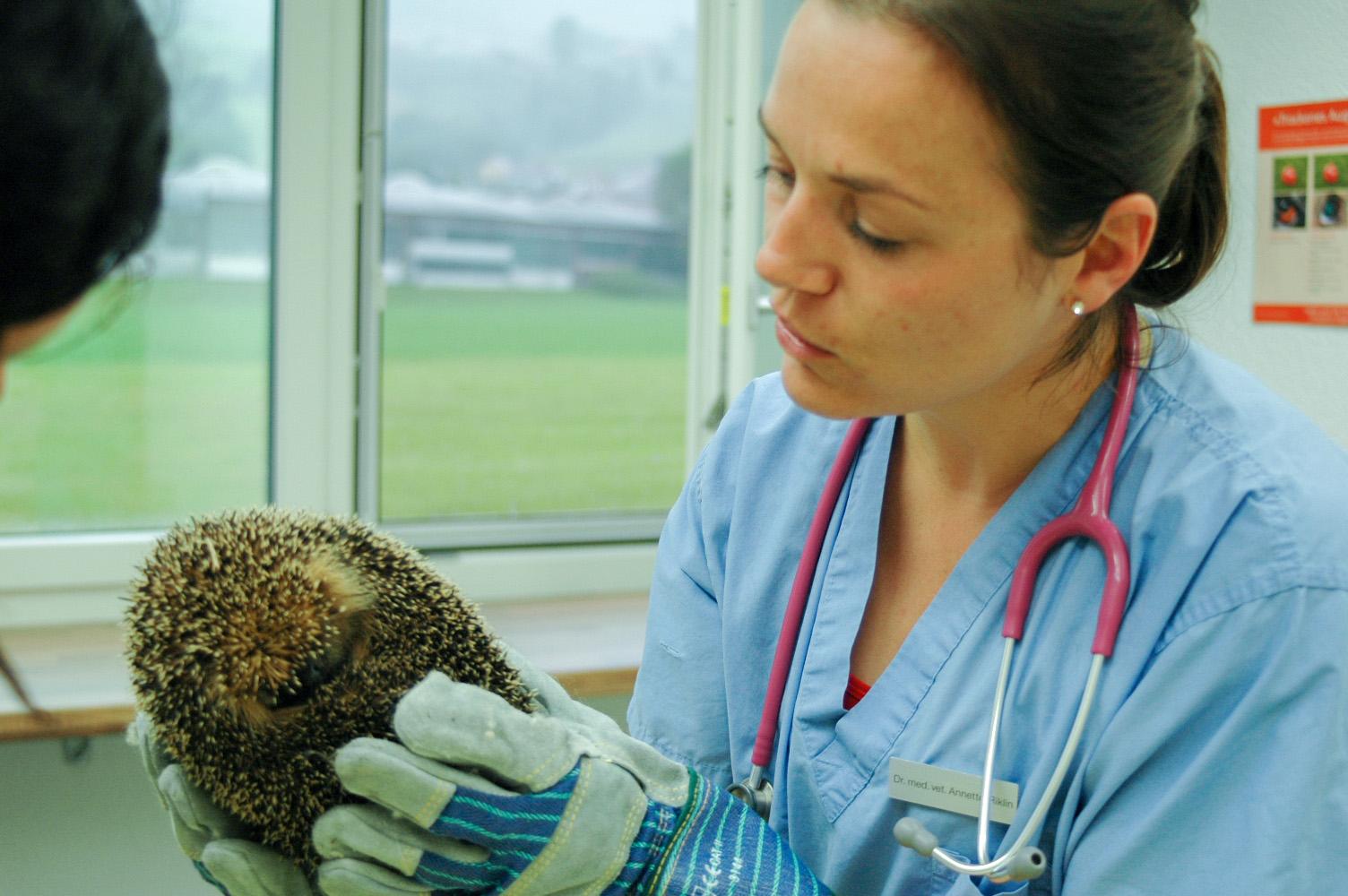 Dr. med vet. Annette Riklin mit einem Igel-Patient